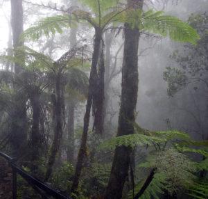 湿度の高いマレーシア