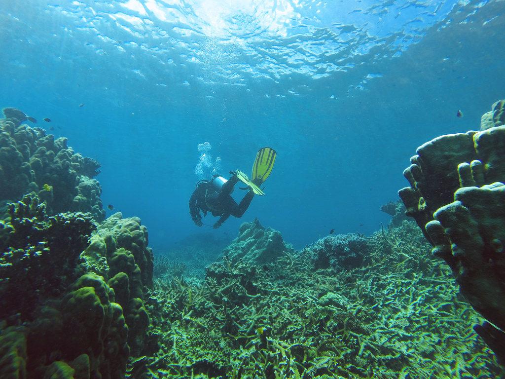 マレーシアでダイビング
