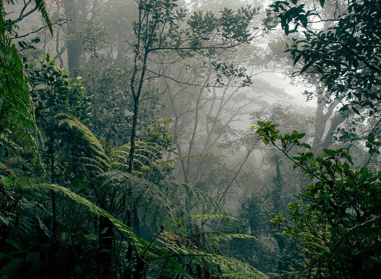 熱帯 雨林 気候