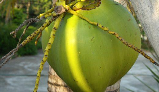 マレーシアは「ココナッツ」パラダイス