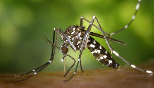 マレーシアの蚊は怖い?
