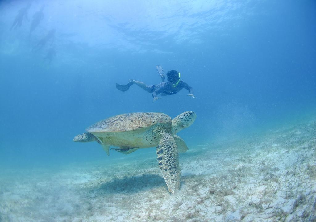 プルフンティアン島のウミガメ