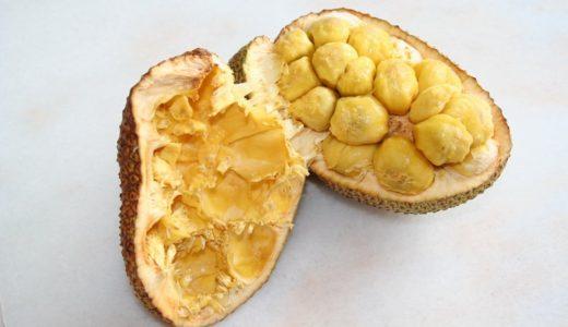日本では見かけない珍しい南国フルーツ、チェンパダの季節がやってきました!【マレーシアのフルーツ】