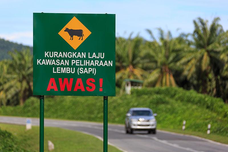 牛に注意の道路標識