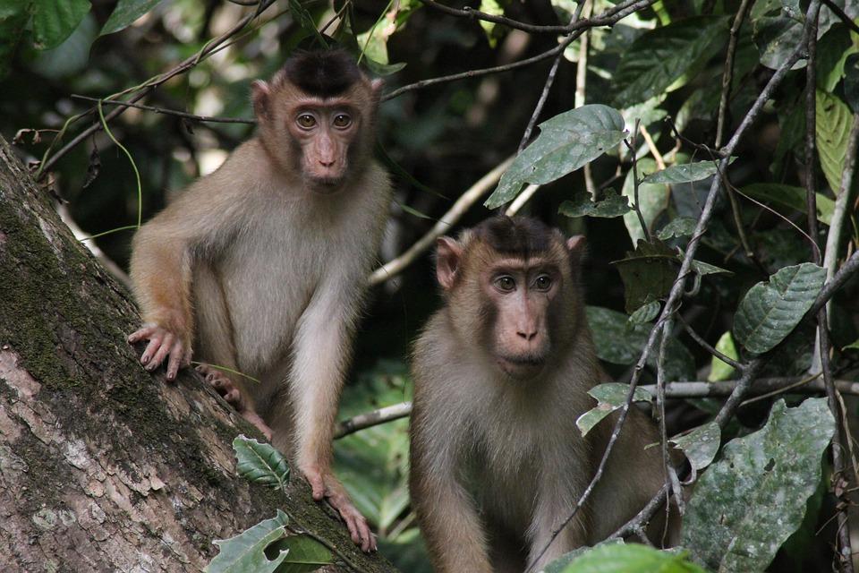 ボルネオ島の動物