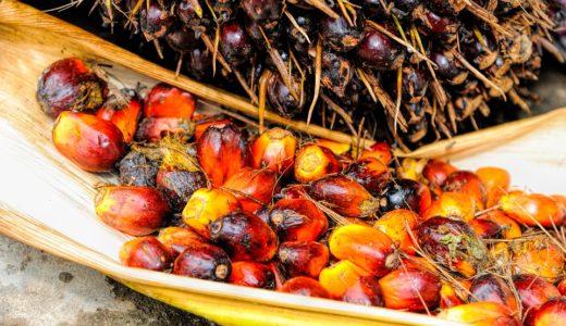 マレーシアといえば「パーム油」