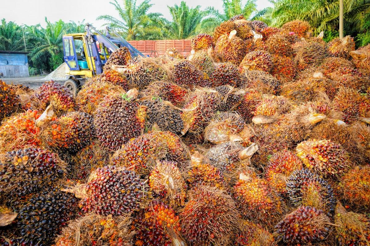 マレーシアのパーム油
