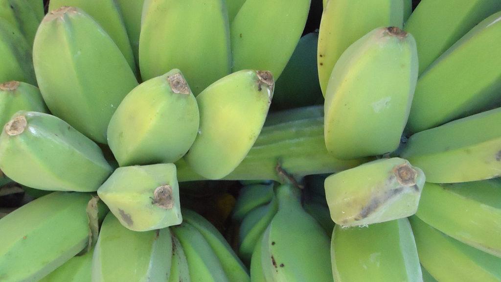 バナナチップに使われるバナナ