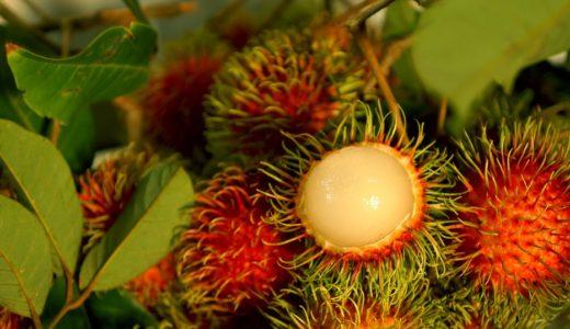 ドリアンだけじゃない!マレーシアを代表する珍しいトロピカルフルーツ10選