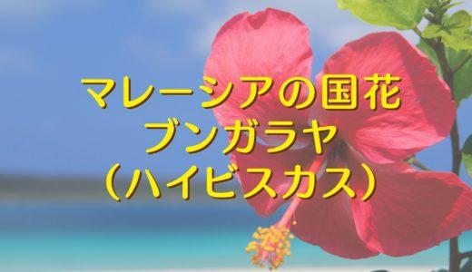 マレーシアの国花「ブンガラヤ (=ハイビスカス)」